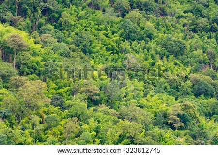 The tropical rainforest of Southeast Asia, Ratchaburi, Thailand