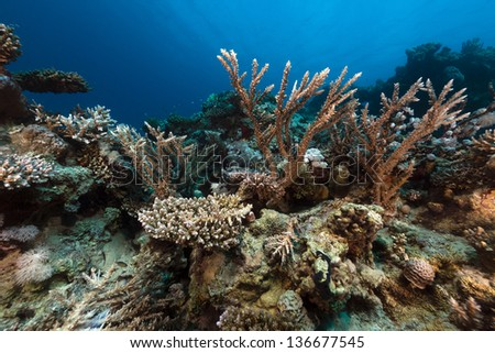 The tropical waters of the Red Sea - stock photo