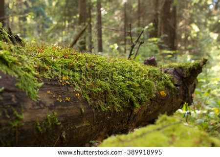 the trunk of a fallen tree in the forest, mossy
