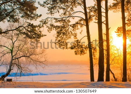 The trunks of the pines on the shore of a frozen lake in the rays of the rising sun - stock photo