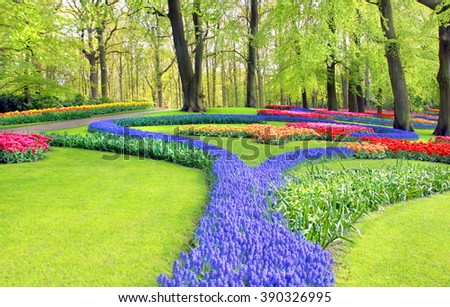 The tulip gardens of De Keukenhof are one of the most beautiful places they will ever see when tourists are visiting the Netherlands   - stock photo