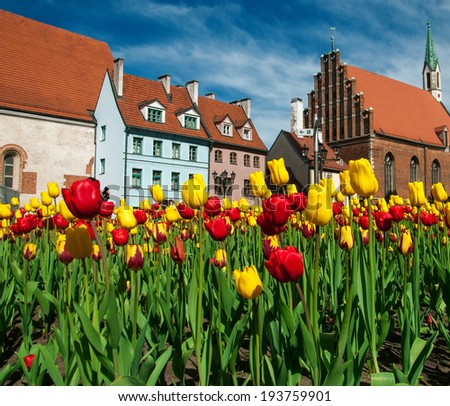 The tulips and facades of old houses in Riga, Latvia - stock photo
