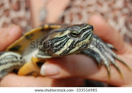 The turtle on the hand of women.