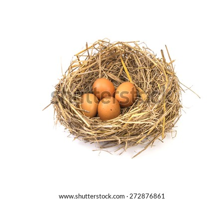 the twigs nest with brown chicken eggs on white background - stock photo