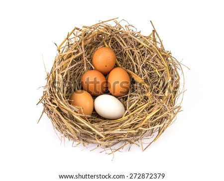 the twigs nest with white egg and one of different or unique - stock photo