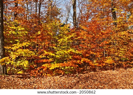 The ultimate Gatineau park color display in fall - stock photo