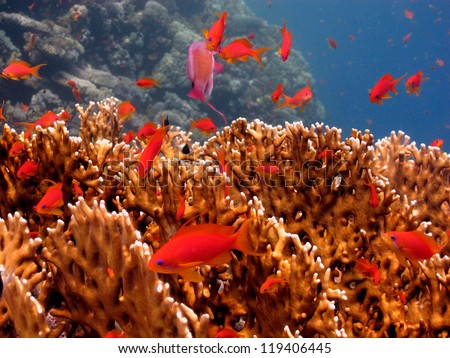The underwater view - hard coral with a school of the fishes around - stock photo
