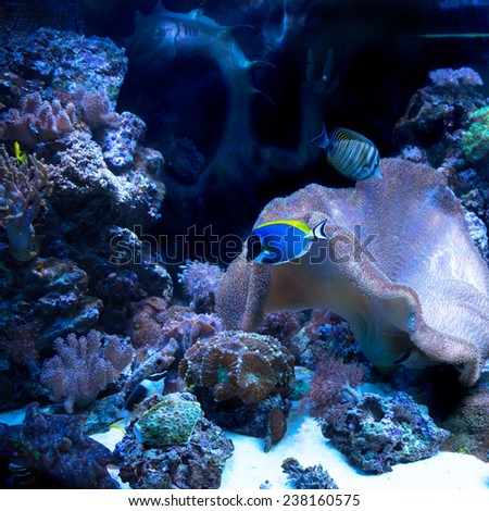 The underwater world. Bright Exotic Tropical coral fish in the Red Sea artificial environment of the aquarium - stock photo