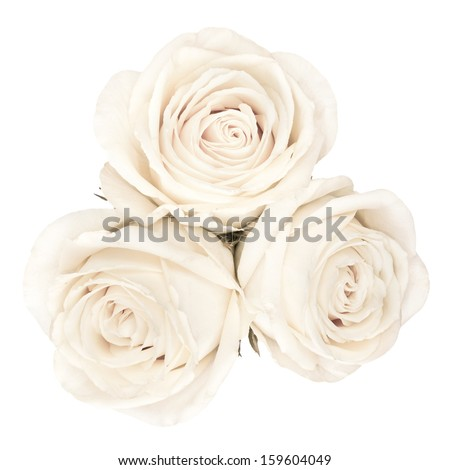 The up shot of white bright beautiful roses - stock photo