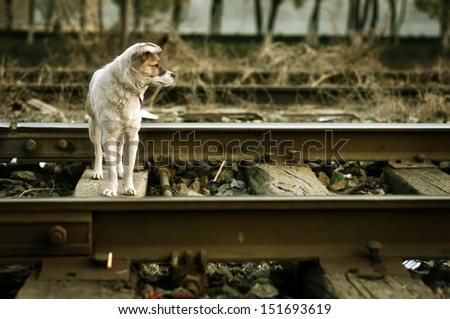 The vagrant dog along the railway line - stock photo