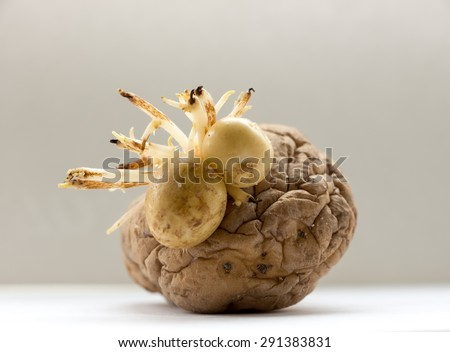 The vegetable  potatoes on a background. Face. - stock photo
