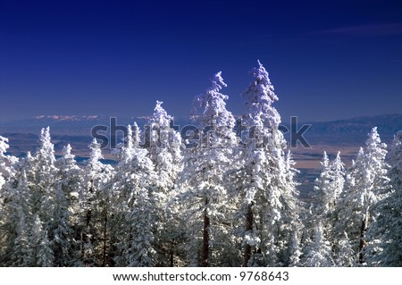 The view from atop the Sandia Mountains outside of Albuquerque as winter remains with the snow covered Pine Trees - stock photo