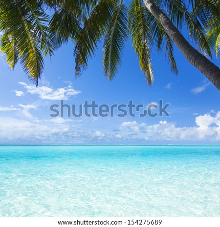 the view from the shore of a palm tree on a tropical turquoise sea