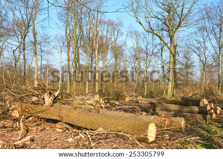 The view of a by a strong storm heavily damaged forest. - stock photo