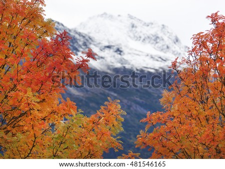 The view of colorful trees in September with a mountain behind (Skagway, Alaska).