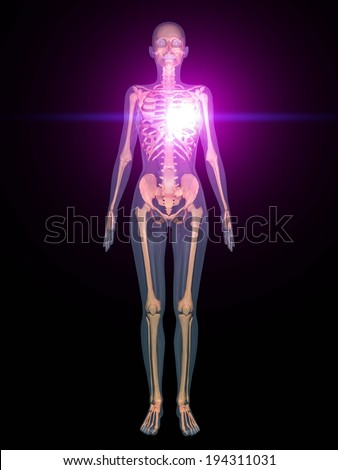 The view of the human body from an x-ray view. - stock photo