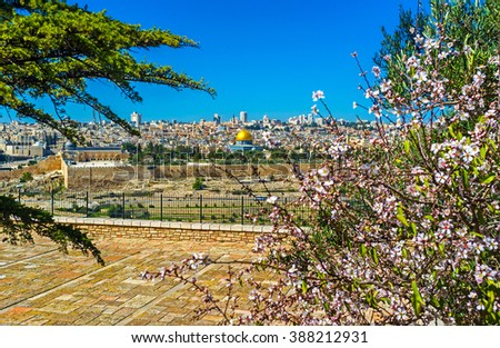 The view through the flowers on the old Jerusalem with the golden top of the Dome of the Rock in the middle, Israel. - stock photo