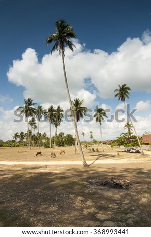 The village scene with coconut trees in focus and cloudy blue sky as background.