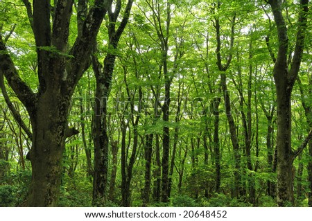 The virgin forest of the fresh green - stock photo