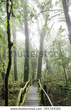 the walk way in the deep forest