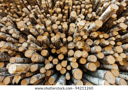 The wall of the barrel sawn birch timber cutting