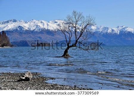 The Wanaka tree seen in Winter.