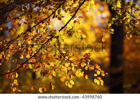 the warm colors of autumn are knocking on the door - stock photo