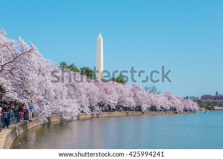 The Washington monument in Washington, DC during the cherry blossom festival - stock photo