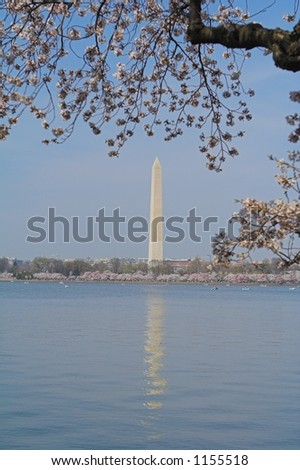 The Washington Monument reflecting in the tidal basin framed by Cherry trees - stock photo