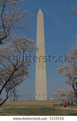 The Washington Monument with Cherry Blossom Trees in the foreground - stock photo