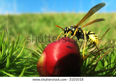 The wasp on the peony - stock photo