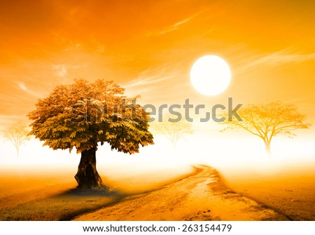 The way and big tree and meadow over sunset background. - stock photo
