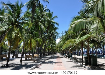 The way between coconut tree beside the beach