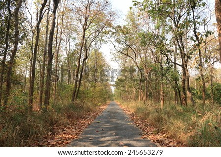 The way in forest, way for jogging/running
