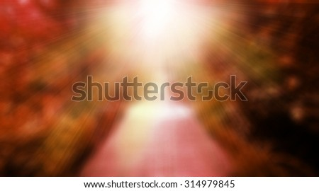 The way wood in the forest spring perspective with red-pink sun light center, red lovely wedding vintage nature trees background - stock photo