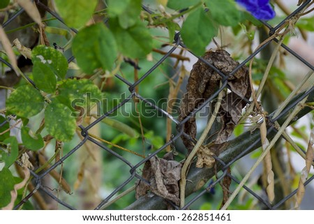 The weeds on the fence. - stock photo