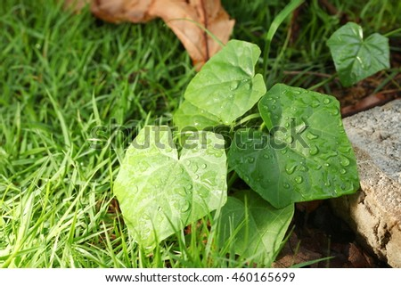 The wet green color leaf represent the botany and plant concept related idea. - stock photo