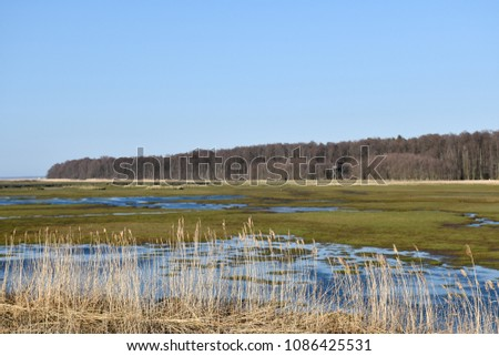 The wetland at Beijershamn located at the swedish island Oland - a famous birding site
