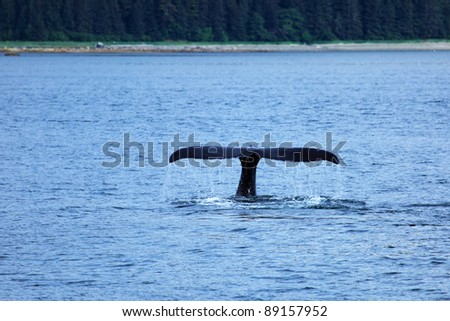 The whale shows the tail - stock photo