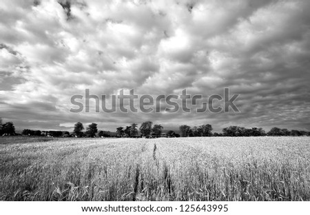 The Wheat Field black and white - stock photo