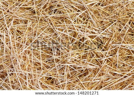 The wheat straw food for cattle. Organic background. - stock photo