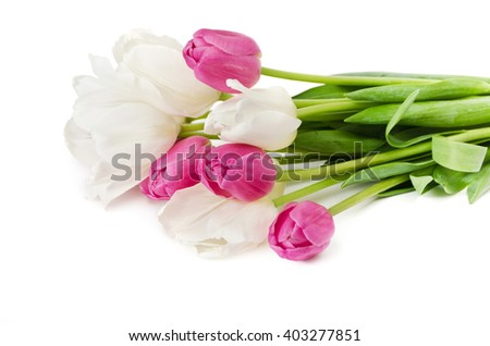The white and pink tulips are isolated on a white background
