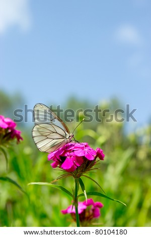 The white butterfly on a purple flower over grass and sky background - stock photo