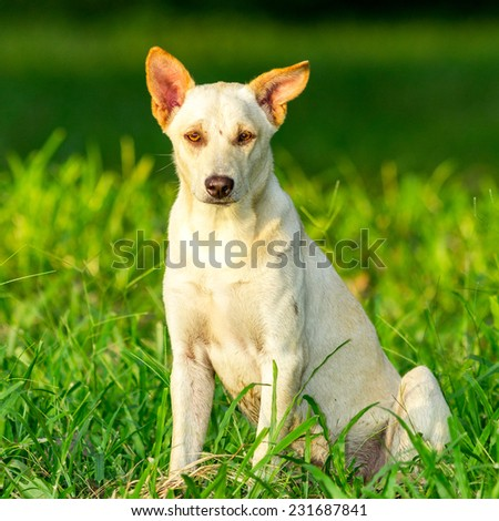 The white dog sitting on the grass.