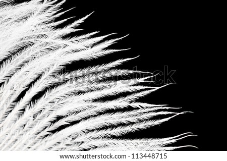 The white feather on a black background - stock photo