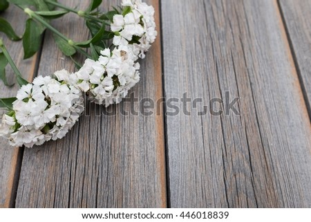 The white flowers of the field on a dark wooden background. Phlox