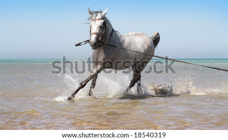 The white horse and dark blue the sea - stock photo