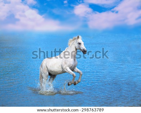 the white horse is staying in the blue lake - stock photo