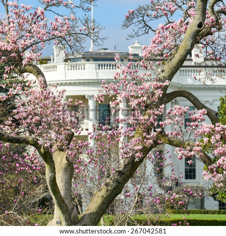 The White House in Spring - Washington D.C. United States of America  - stock photo