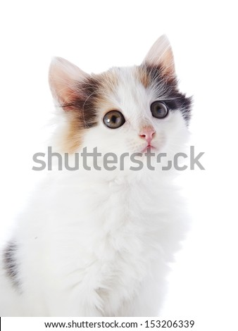 The white kitten with color spots.Multi-colored small kitten. Kitten on a white background. Small predator. Small cat.